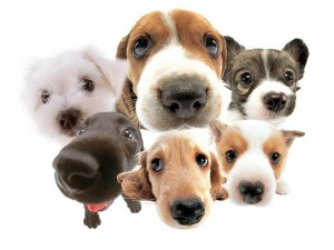 dogs-cute-dogs