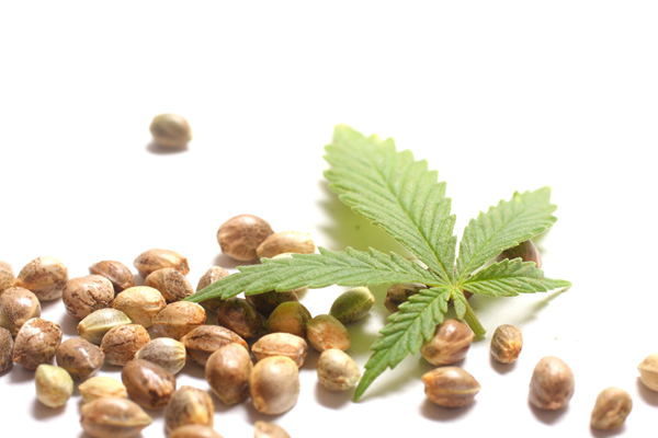 Hemp Seed Nutrition and Medicine