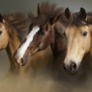 Equine Nutrition Recommends Hempseed Oil