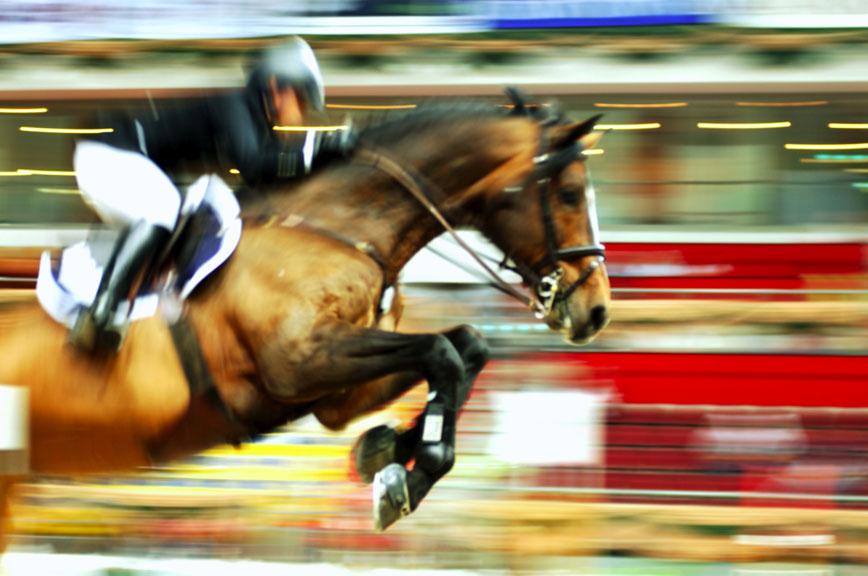 Hemp Seed Oil & Horse Performance