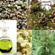 Hemp's Beneficial Omega 6 GLA Fatty Acid An impressive Spectrum of Benefits