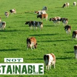sustainable-meat-not-green-myth-051111