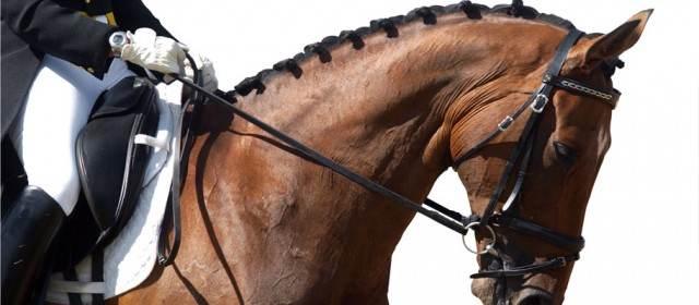 Hemp Oil Horse Performance