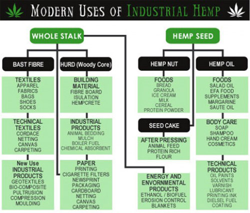 Hemp 101: What we do with our hemp seeds in processing?