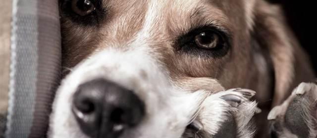 Hempseed Oil For Dogs