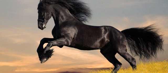 Benefits of Hemp Seed Oil in Equine Nutrition