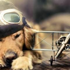Hemp Oil Dog